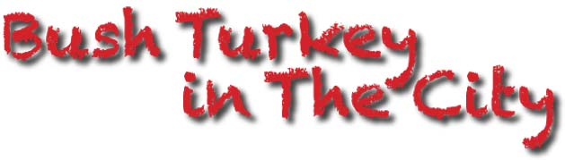 Bush Turkey in the City